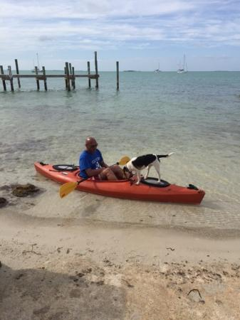White Gate Court: Guests enjoying Kayaking with their Pets