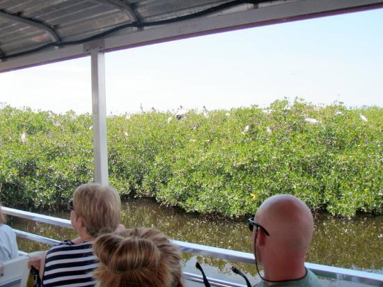 Peace River Boat Tours: birds birds!