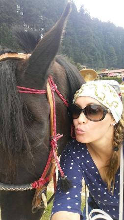 Parque recreativo La Marquesa: Los caballo son muy nobles