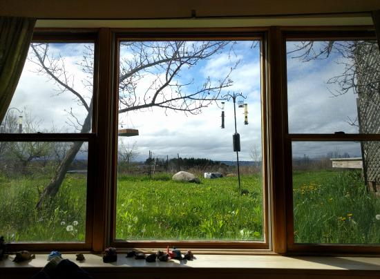 Frogs Way Bed and Breakfast: view from peach room