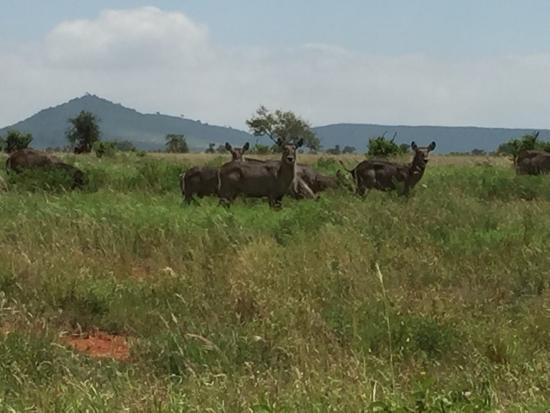 Тсаво, Кения: photo3.jpg