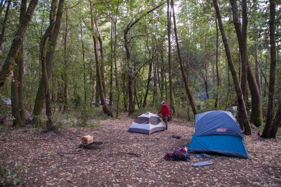 Anderson Valley: Camping in Hendy Woods