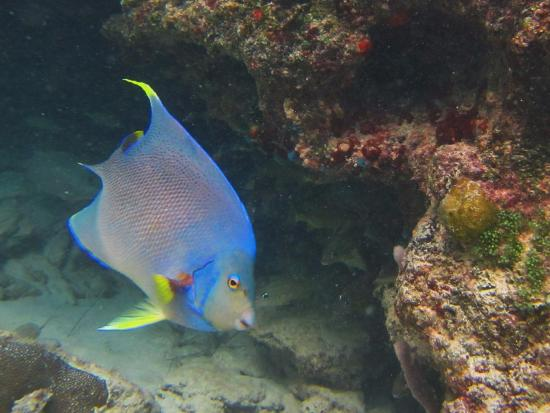 Hamilton, Bermudy: Beautiful angel fish