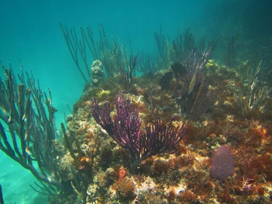 Hamilton, Bermudy: Coral