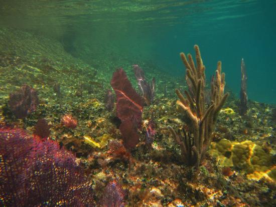 Hamilton, Bermudy: Colorful coral