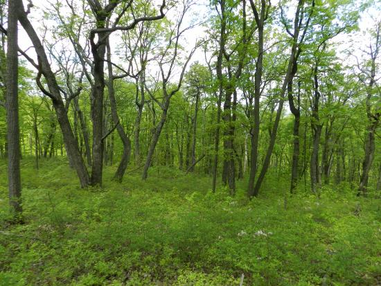 Carlisle, Pensilvania: The woods are lush and beautiful