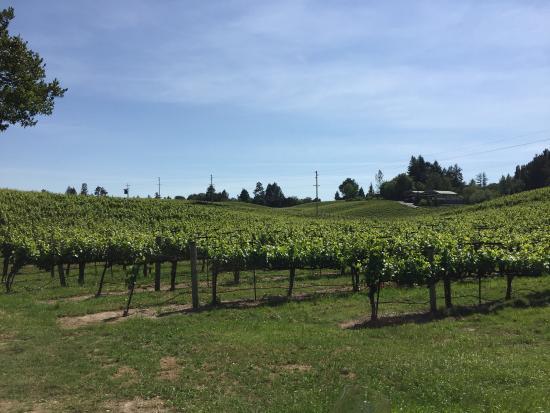 Lynmar Estate Winery: photo2.jpg