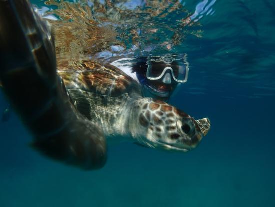 Christ Church Parish, Barbados: Swimming with the Turtles