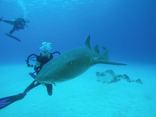 Liquid Blue Divers: up close and personal!