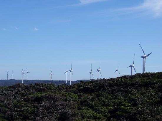 Albany, Avustralya: Many wind turbines