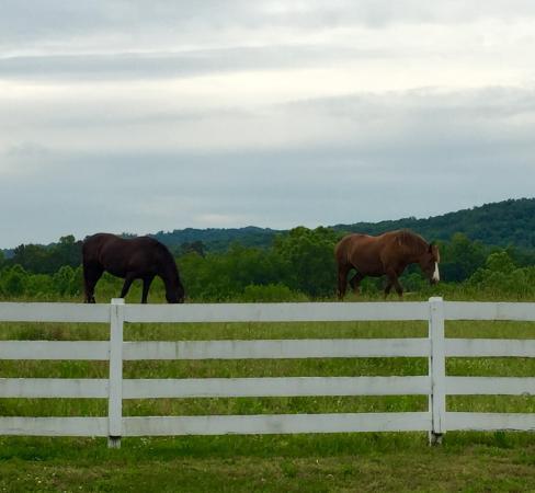 Whitestone Country Inn: Graceful grazing!