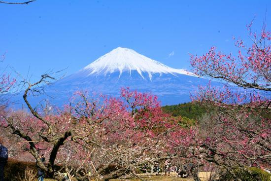 Mt. Iwamoto