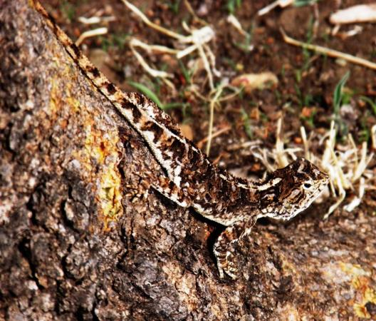 Lake Manyara National Park, Tanzania: some of the smaller citters in and around the camp