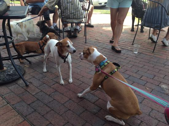My dog made some friends on the patio of Pensacola Bay