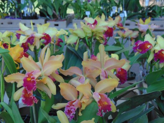 Flores Lindas A Venda Picture Of Crystal Palace Petropolis