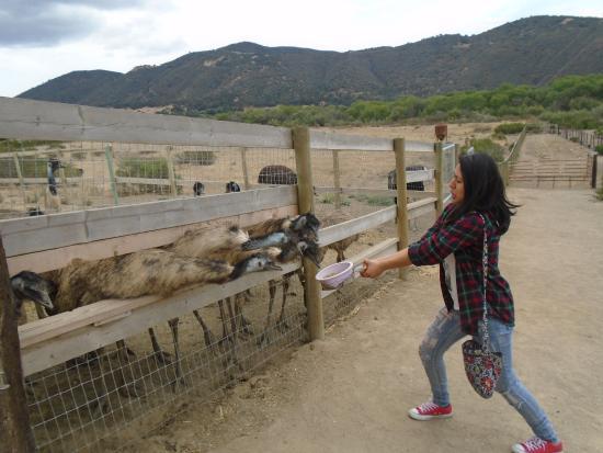 Buellton, Kaliforniya: Scared for her life lol