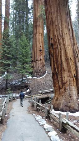 Three Rivers, Kalifornia: a spasso tra i giganti