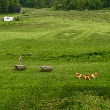 North Garden, VA: Part of the Loving Cup grounds and vineyards