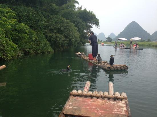 Li River Resort: Pesca con cormoranes