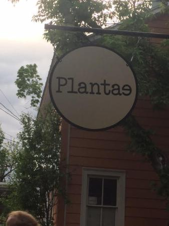 Tivoli, NY: The Amazing Platae