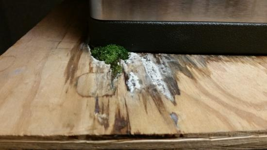 McMinnville, TN: this is a picture of the top of the ice machine on the 3rd floor, it looks like mold & grass