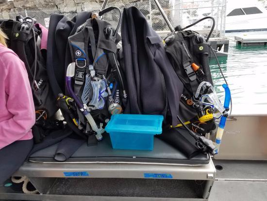 Pacific Rim Equipment >> Good Diving Equipment Picture Of Pacific Rim Divers