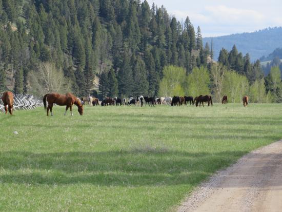 The Ranch at Rock Creek: horses at pasture