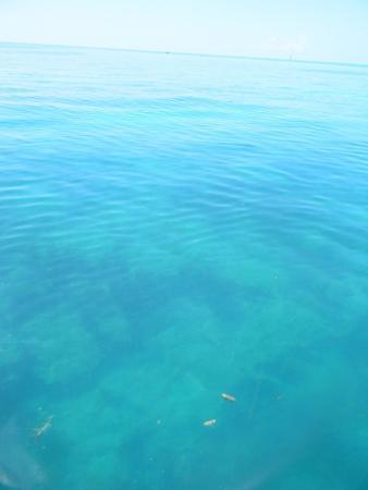 Key West Glass Bottom Boats Fl Top Tips Before You Go Tripadvisor
