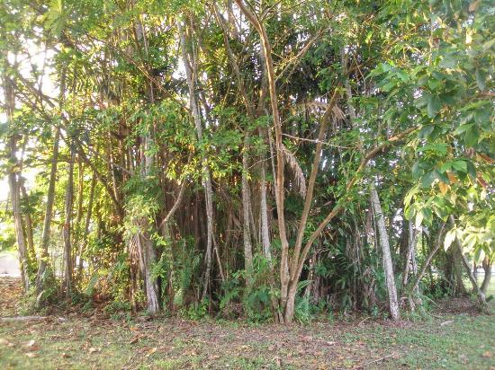 Bintulu, Malasia: Taman Millenium