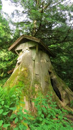 Seabeck, WA: Stump House, Hollowed out and you can go inside.