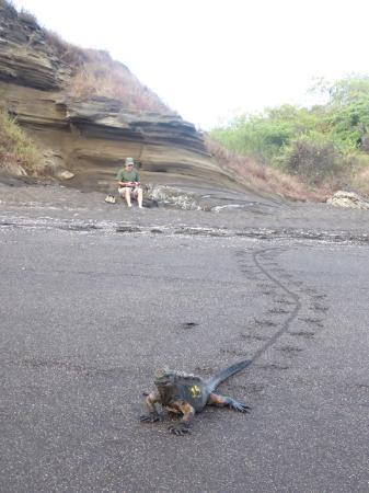 Santiago, Equador: Marine iguana