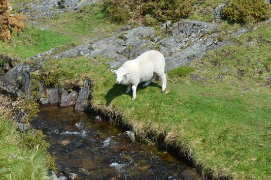 Church Stretton, UK: Carding Mill Valley Stream