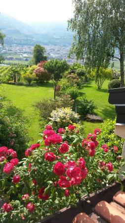 B&B La Betulla: Il nostro giardino