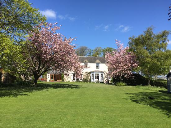 Aberlady, UK: Cherry Blossoms in full bloom
