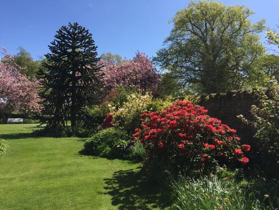 Aberlady, UK: Spring garden