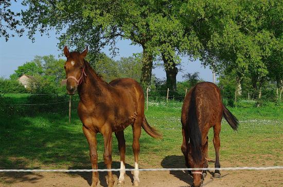 Saint-Brice, France: chevaux