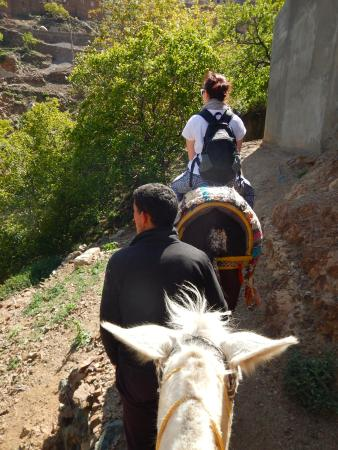 Morocco Mountain Guides- Day Tours: Travelling by mule