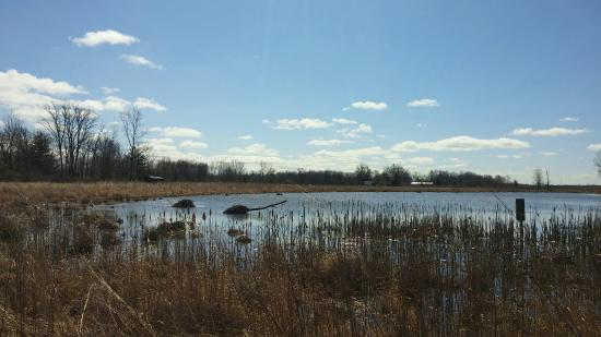 Seneca Meadows Wetlands Preserve