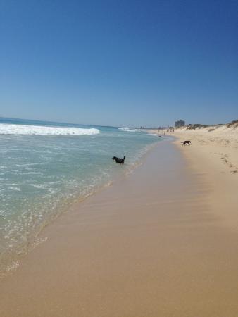 Floreat Beach : North Floreat dog beach