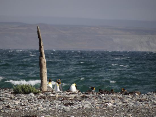 Огненная Земля, Чили: Kids by the sea !