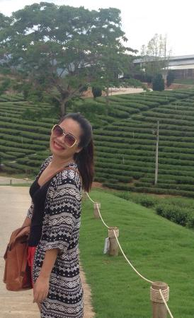 Mae Chan, Thailand: A relaxing day at Choui Fong Tea Plantation