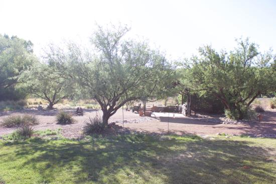 Hereford, AZ: View from the backyard viewing area.