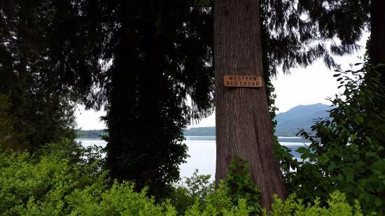 Lac Quinault