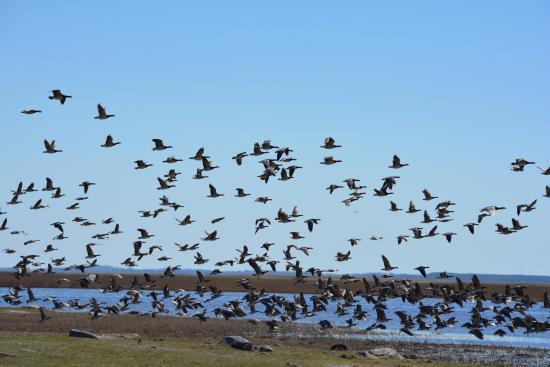 Haeska, เอสโตเนีย: Birdwatchers paradise. The bay is a short walk away.