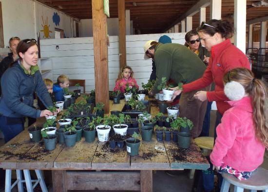 Edgartown, MA: Planting seedlings in the barn.