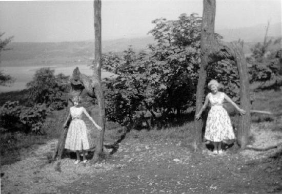 Арнсайд, UK: The Twin Trees at Arnside knott taken 1959
