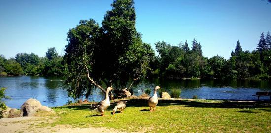 Woodward Regional Park: Duckpond by the entrance