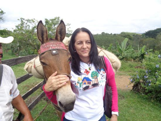 Quindio Department, Colombia: En  el parque  se  dispone de  caballos y allí  te  explican  claramente   la  arrieria.