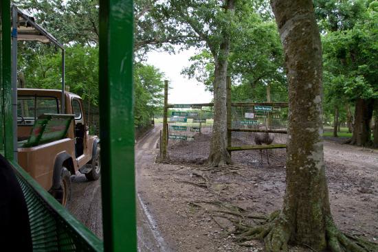 Bayou Wildlife Zoo in Alvin