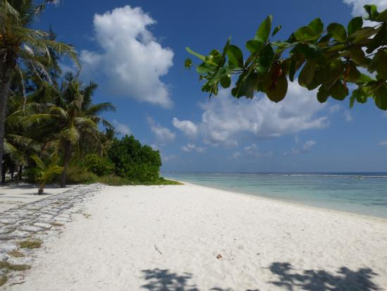Palm View Tourist Guest House: La playa delante del hotel